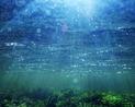 Rui Costa abre fórum ambiental que traz assessor do governo Obama...
